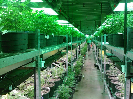marijuana_grow_dispensary
