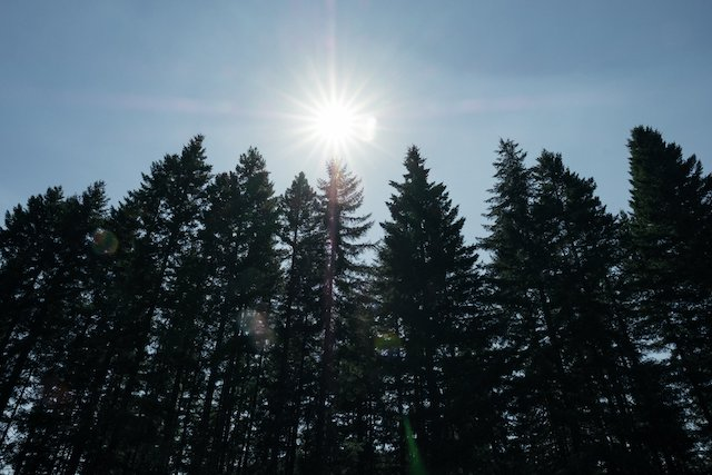 sun-trees-forest